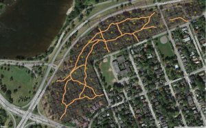 Existing trails within the NCC forest at Champlain Park